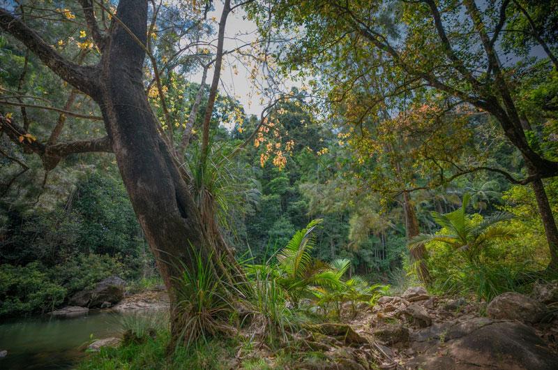 yoga wellness retreat queensland australia 4